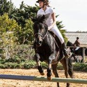 Cheval : saut d'obstacle